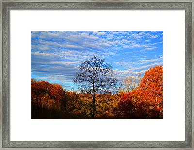 Framed Print featuring the photograph Treetops Sunrise by Kathryn Meyer