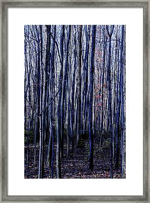Treez Blue Framed Print