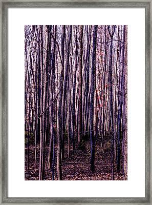 Treez Magenta Framed Print