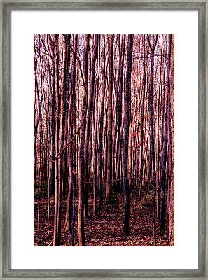 Treez Red Framed Print