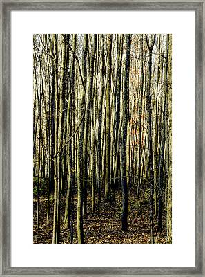 Treez Yellow Framed Print