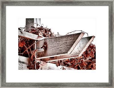 Trellis Framed Print