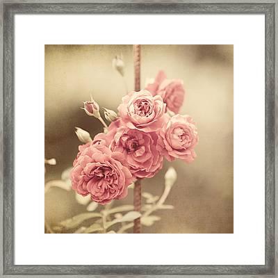 Trellis Roses Framed Print by Lisa Russo