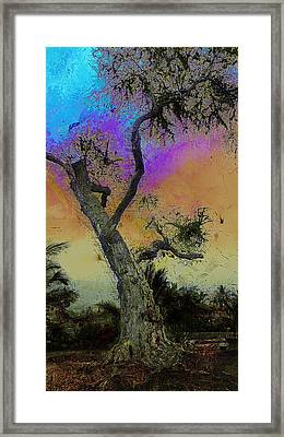 Framed Print featuring the photograph Trembling Tree by Lori Seaman