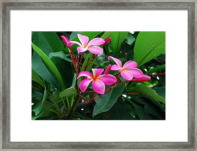Tres Floras Framed Print by M Ryan