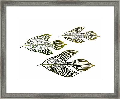 Tres Peces Framed Print by Dessie Marshall