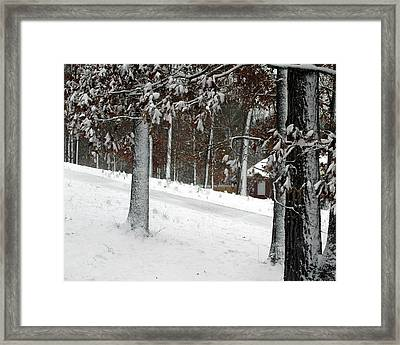 Tress Of Snow Framed Print by Lynn Reid
