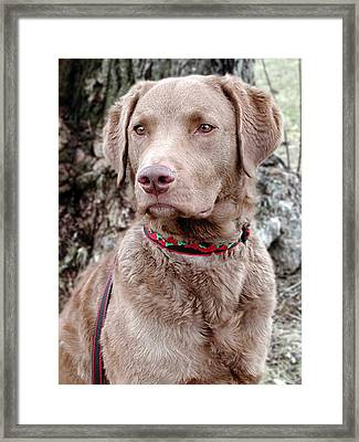 Trevor Framed Print by Laurie With