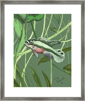Tri Color Krib Framed Print