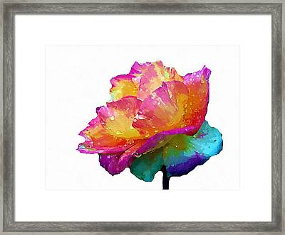 Framed Print featuring the photograph Tri Color Rose by Joseph Frank Baraba
