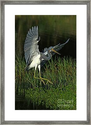 Tri Color With Snack Framed Print