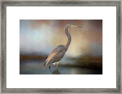 Tri-coloured Heron Framed Print