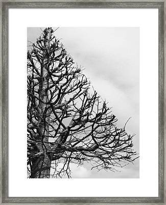 Triangle Tree Framed Print by Linda Woods