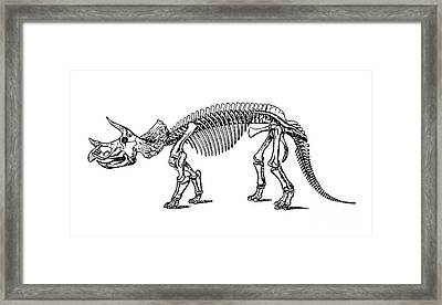 Triceratops Dinosaur Tee Framed Print by Edward Fielding