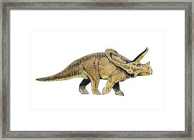 Triceratops Framed Print by Michael Vigliotti