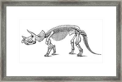 Triceratops Prorsus Framed Print by Science Source