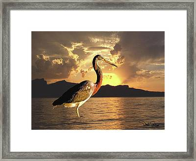 Tricolored Heron At Sunset Framed Print