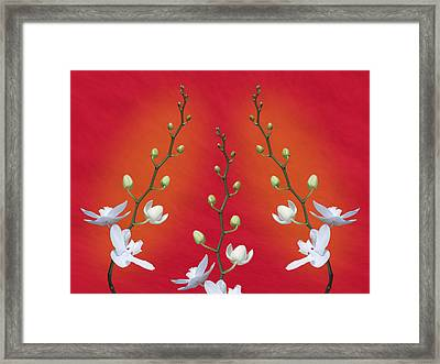Trifecta Of Orchids Framed Print by Tom Mc Nemar