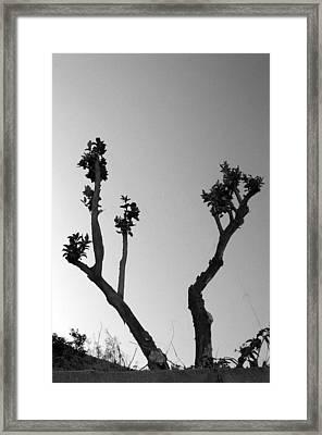 Triffid Return Framed Print by Jez C Self