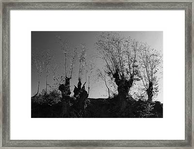 Triffid Time Framed Print by Jez C Self