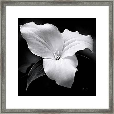 Framed Print featuring the photograph Trillium Black And White by Christina Rollo
