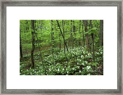 Trillium Heaven Framed Print