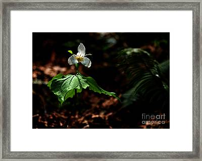 Trillium In The Woods Framed Print by Sharon Talson
