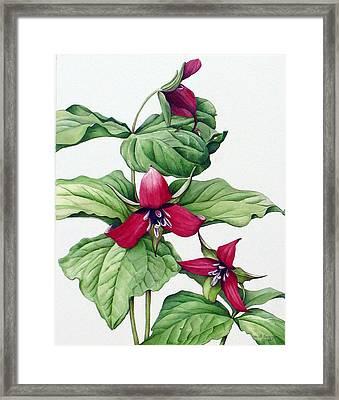 Framed Print featuring the painting Trillium Trio by Margit Sampogna