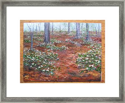 Trilliums After The Rain Framed Print