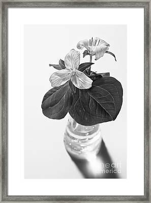 Trilliums In A Vase  Framed Print by Masako Metz
