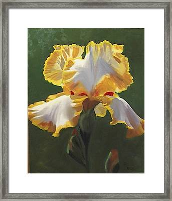 Trimmed In Yellow 1 Framed Print by Robert Tower