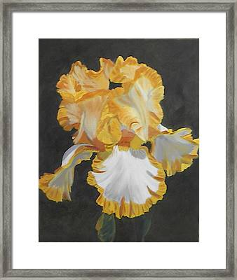 Trimmed In Yellow 2 Framed Print by Robert Tower