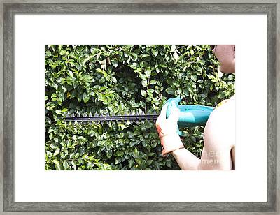 Trimming A Bush Framed Print