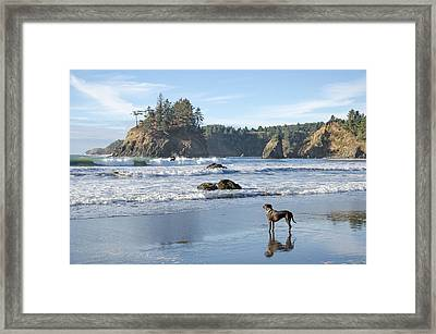 Trinidad Intrigue Framed Print