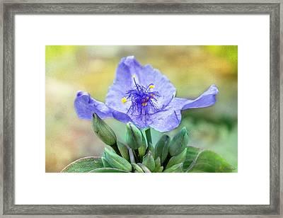 Trinity Flower Framed Print by Melissa Bittinger