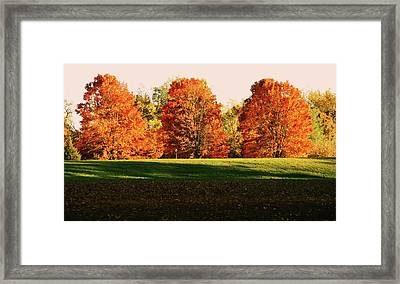 Trinity Trees Framed Print by Hye Ja Billie
