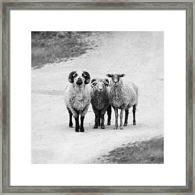 Trio #1478 Framed Print