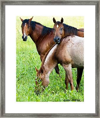 Framed Print featuring the photograph Trio by Don Durfee
