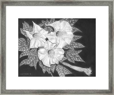 Trio Of Heavenly Blossoms Framed Print by Nicole I Hamilton