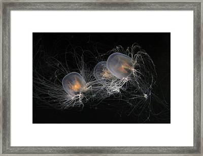Trio Of Jellies Framed Print by Xn Tyler