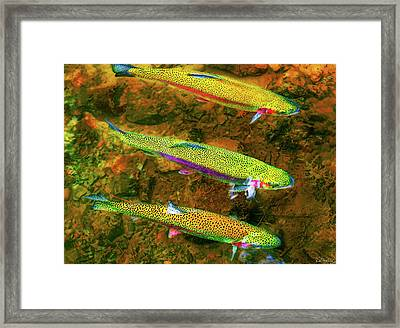 Trio Of Rainbow Trout Framed Print by Dee Browning