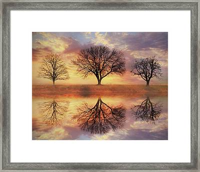 Trio Of Trees Framed Print by Lori Deiter