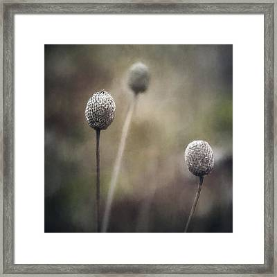 Trio Framed Print by Scott Norris
