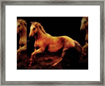 Triple Horse Framed Print by Nick Sokoloff