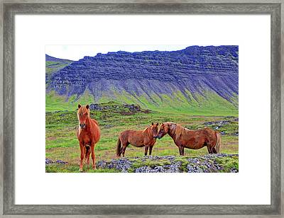 Framed Print featuring the photograph Triple Horses by Scott Mahon