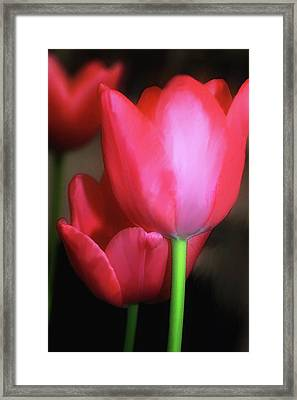 Framed Print featuring the photograph Triple Treat by Carol Kinkead