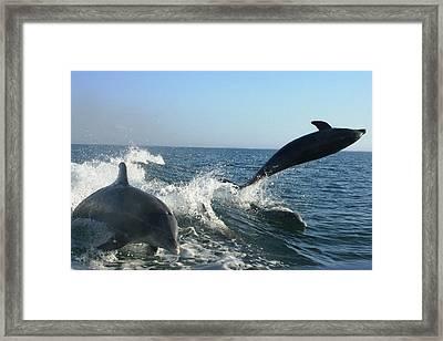 Triple Treat Framed Print by Tara Moorman Photography