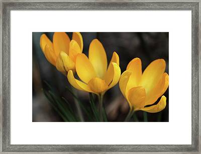 Framed Print featuring the photograph Triplets by Connie Handscomb