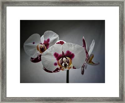 Framed Print featuring the photograph Triplets by Karen Stahlros