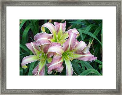 Framed Print featuring the photograph Triplets by Sandy Collier